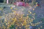 Q1 2012 Yard & Garden Round-Up