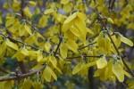 March Flora