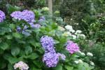 May Flora