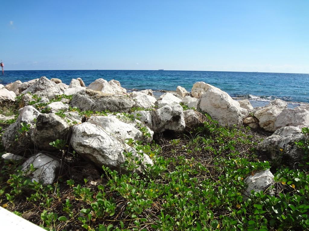 ocean rocks and vines