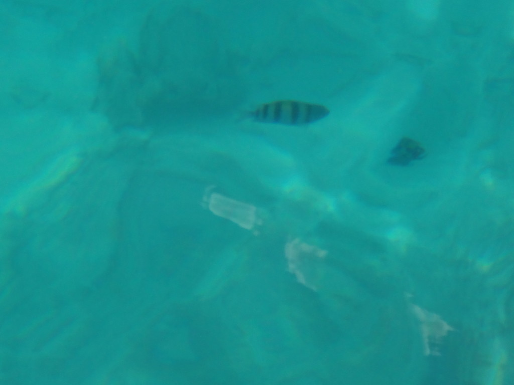 fish in the water off aruba