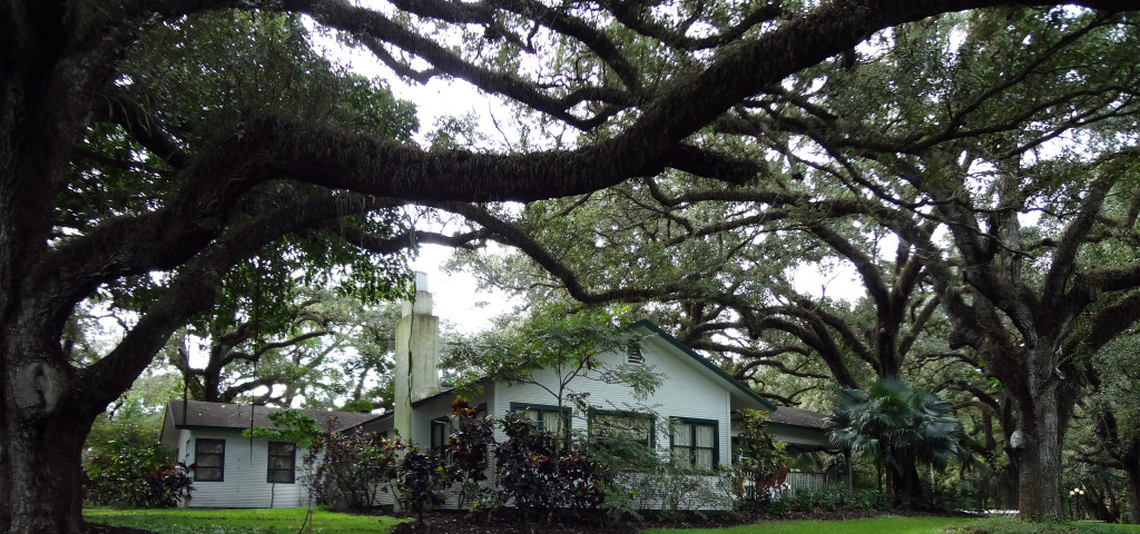 Wray House and live oaks