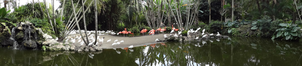 Flamingos and White Ibis