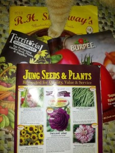 seed catalogs and kitty leg