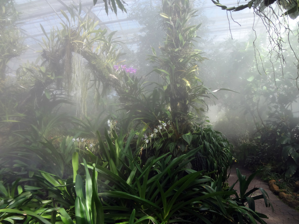 Misting the orchid house