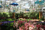 Atlanta Botanical Gardens' Orchid Daze: Surreal Beauty