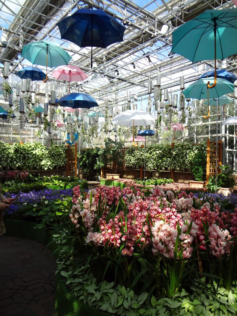 Orchid Daze: Surreal Beauty