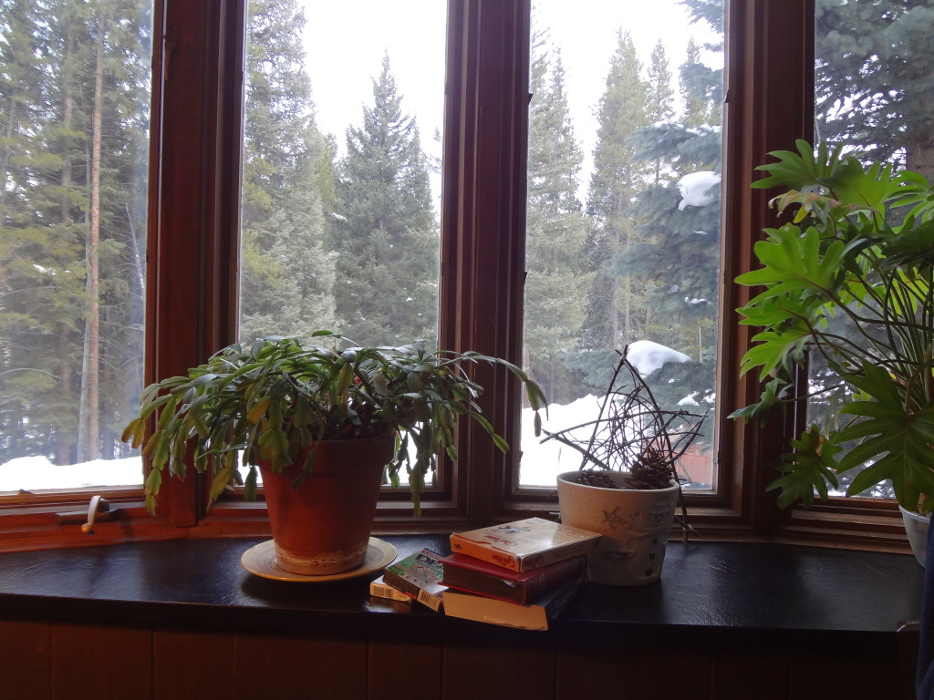 View from one of the bay windows. The other has an enormous jade plant in it.