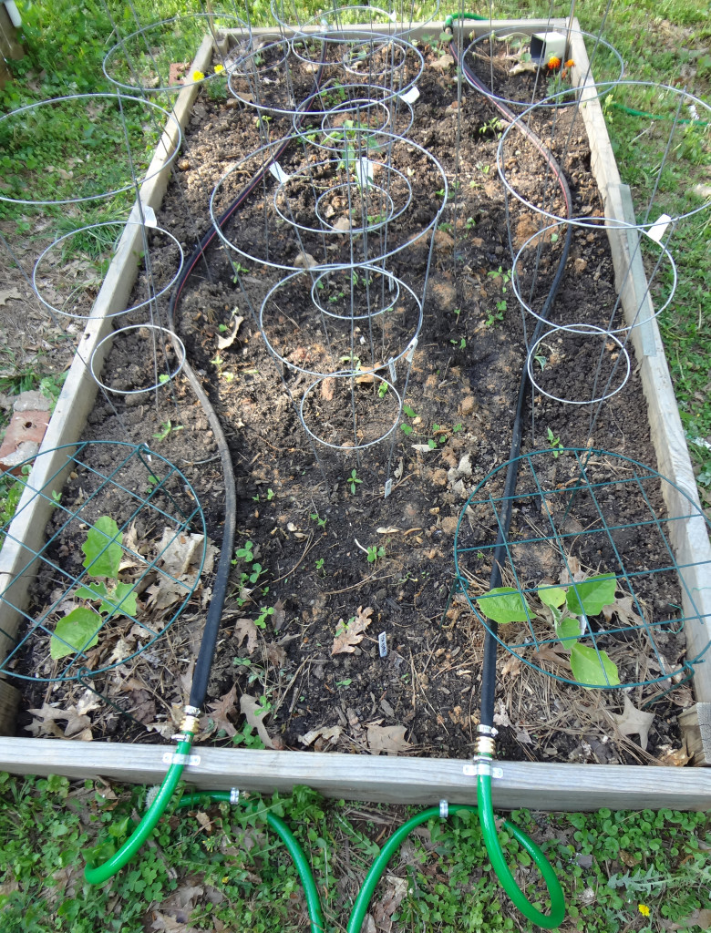 The first raised bed.