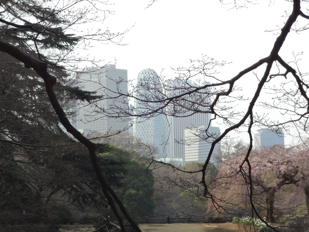 Looking over Shimono-Ike towards the skyline