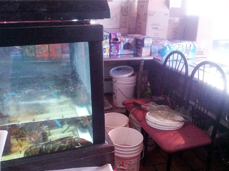 Questionable looking lobster tank and various containers and things