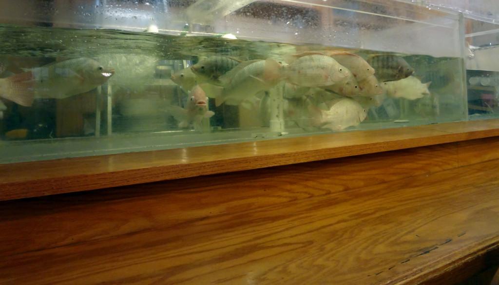 Bo Bo Garden's live fish