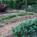 Horseradish Grill's garden