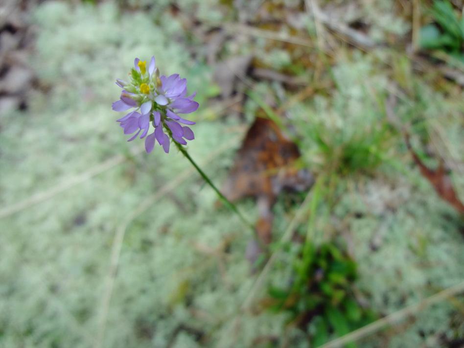 Flower and lichen