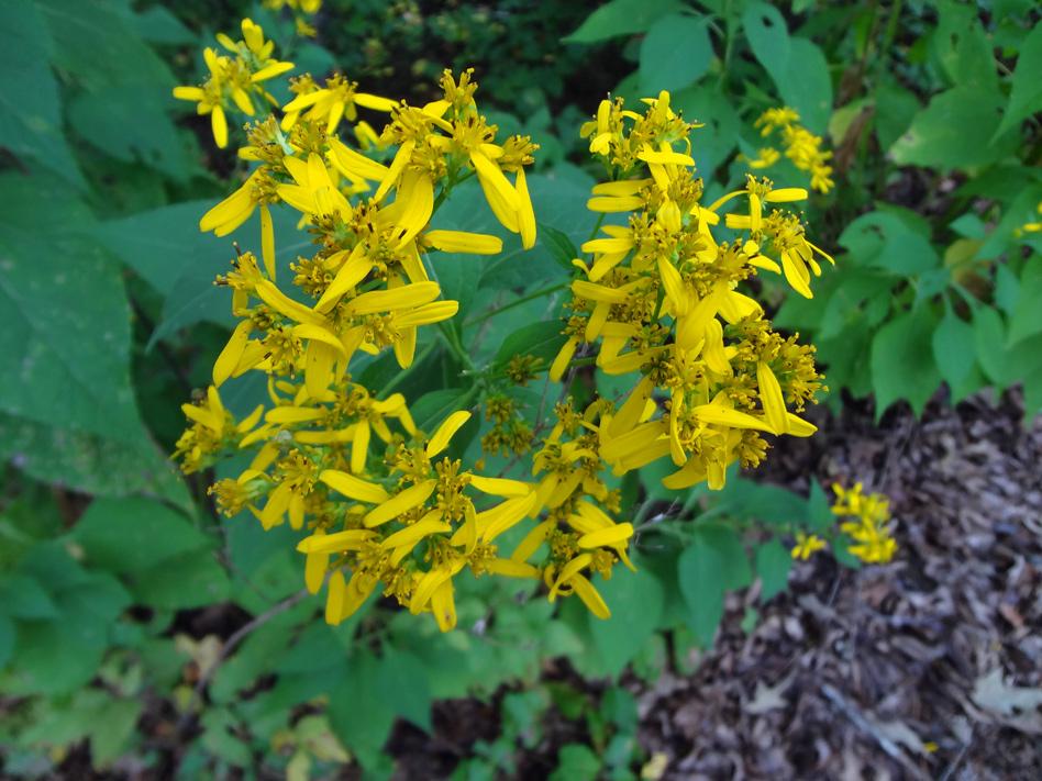 Native flower